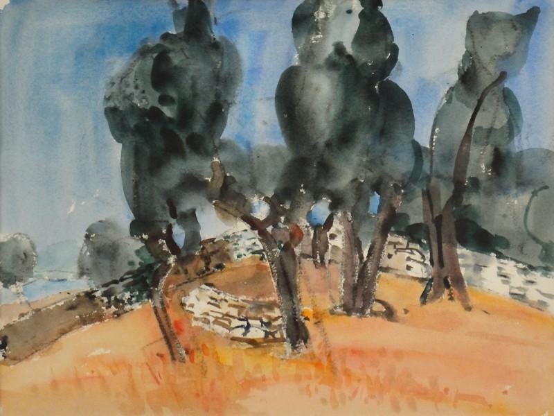 Olivenbäume bei Saturnia